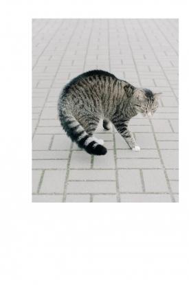 http://jakobschnetz.com/files/gimgs/th-71_spiegel-emily-tiger.jpg